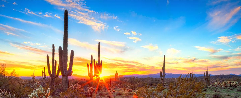 Arizona desert cactus pictures Phoenix Desert Nursery. Cactus, Succulents, Desert