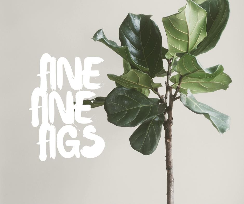 fine fine figs