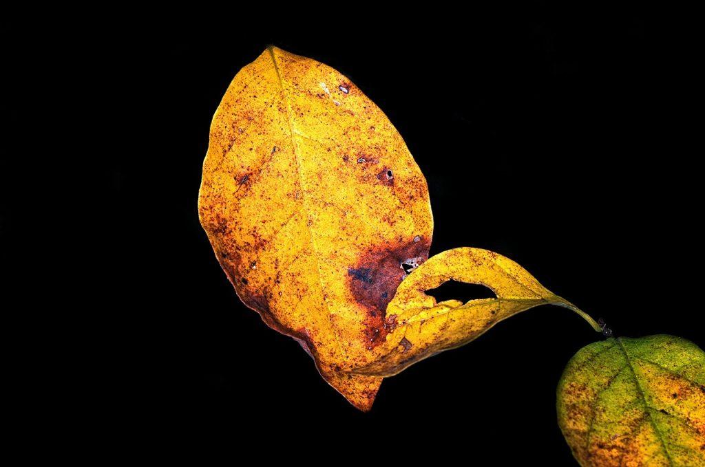 fall-438229_1280