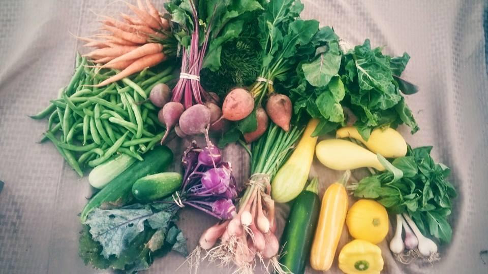 paradise-produce-farm