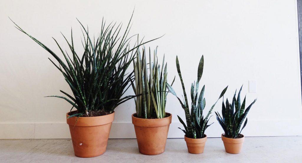 flora-plants