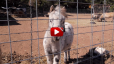 Video thumbnail for a hunting lodge and horse farm in mountains of New Mexico for sale by Real Estate team, Chisum Realty Group, a Keller Williams company