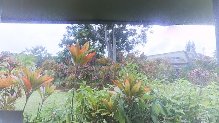 Feel like you are in the jungle ;)