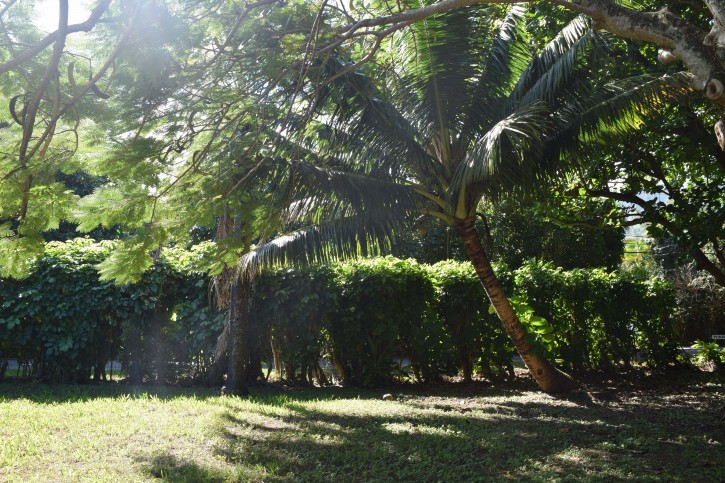 Haena Land For Sale Hanalei Kauai North Shore 23