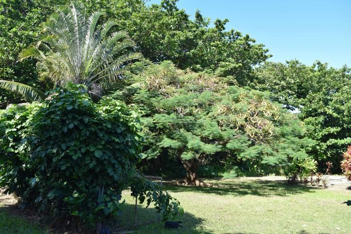 Haena Land For Sale Hanalei Kauai North Shore 29