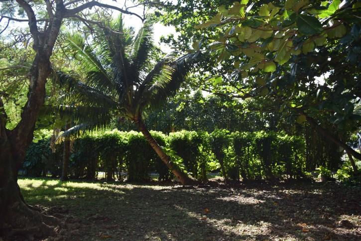 Haena Land For Sale Hanalei Kauai North Shore 6
