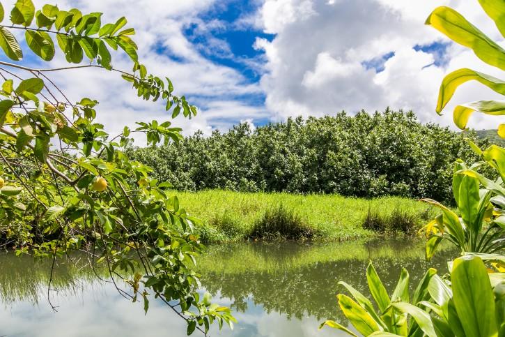 Photo-77648-Guava-4639
