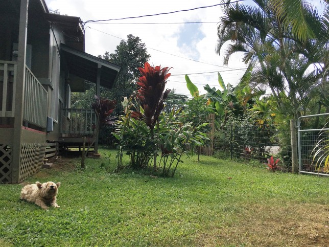 http://www.kauairealestategroup.com/blog/4445-hookui-kilauea-home-for-sale-with-new-garage-and-penthouse-large-corner-lot/