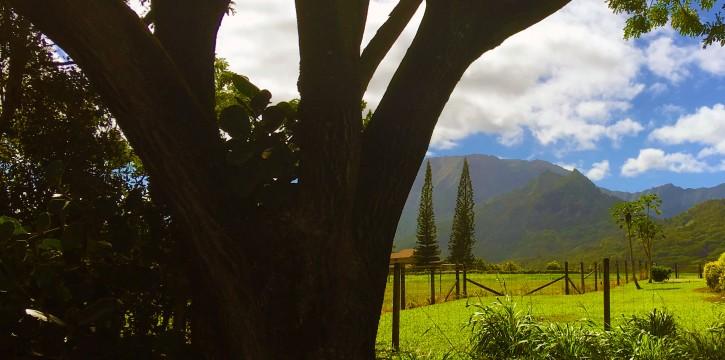 Kapaka Princeville Home For Sale Kauai North Shore Lanai Backyard