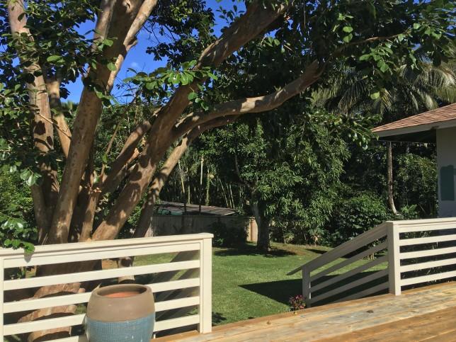 KaluaMakua house for sale Kilauea Back 12