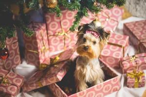 Dog Presents Christmas