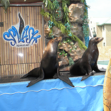 Sea Lion Splash is one of many free shows you can see at the fair