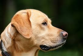 """Dogs may be """"man's best friend"""", but can also create unwanted owners that buyers won't want"""