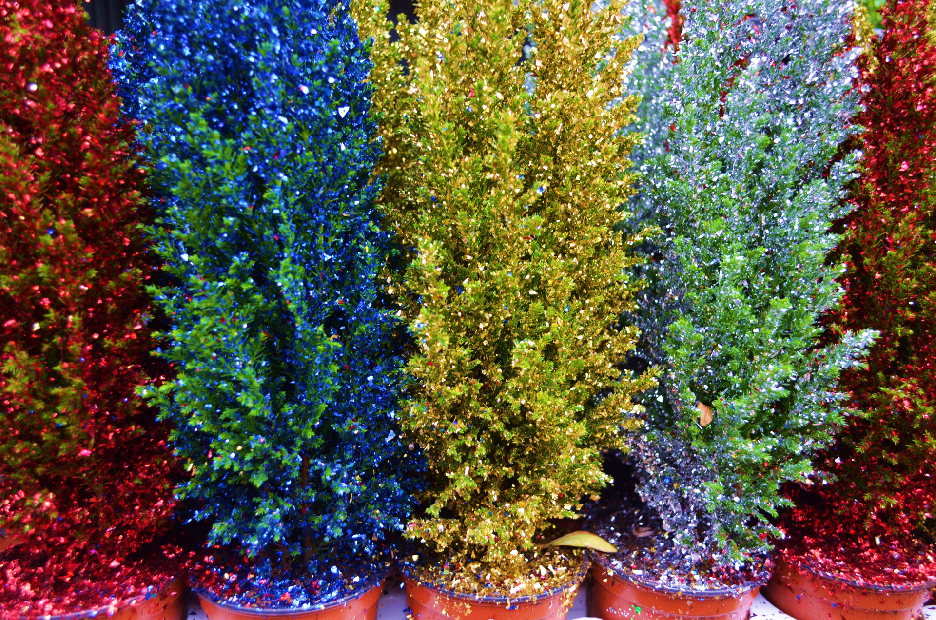 Colored Christmas trees are becoming popular | Anderson, Pickens and ...