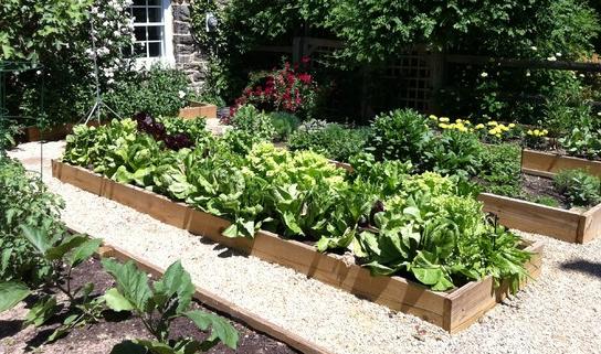 Hendersonville Organic Gardens