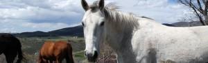 Equestrian Estates For Sale in Tucson