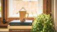 4 Benefits of Having Houseplants