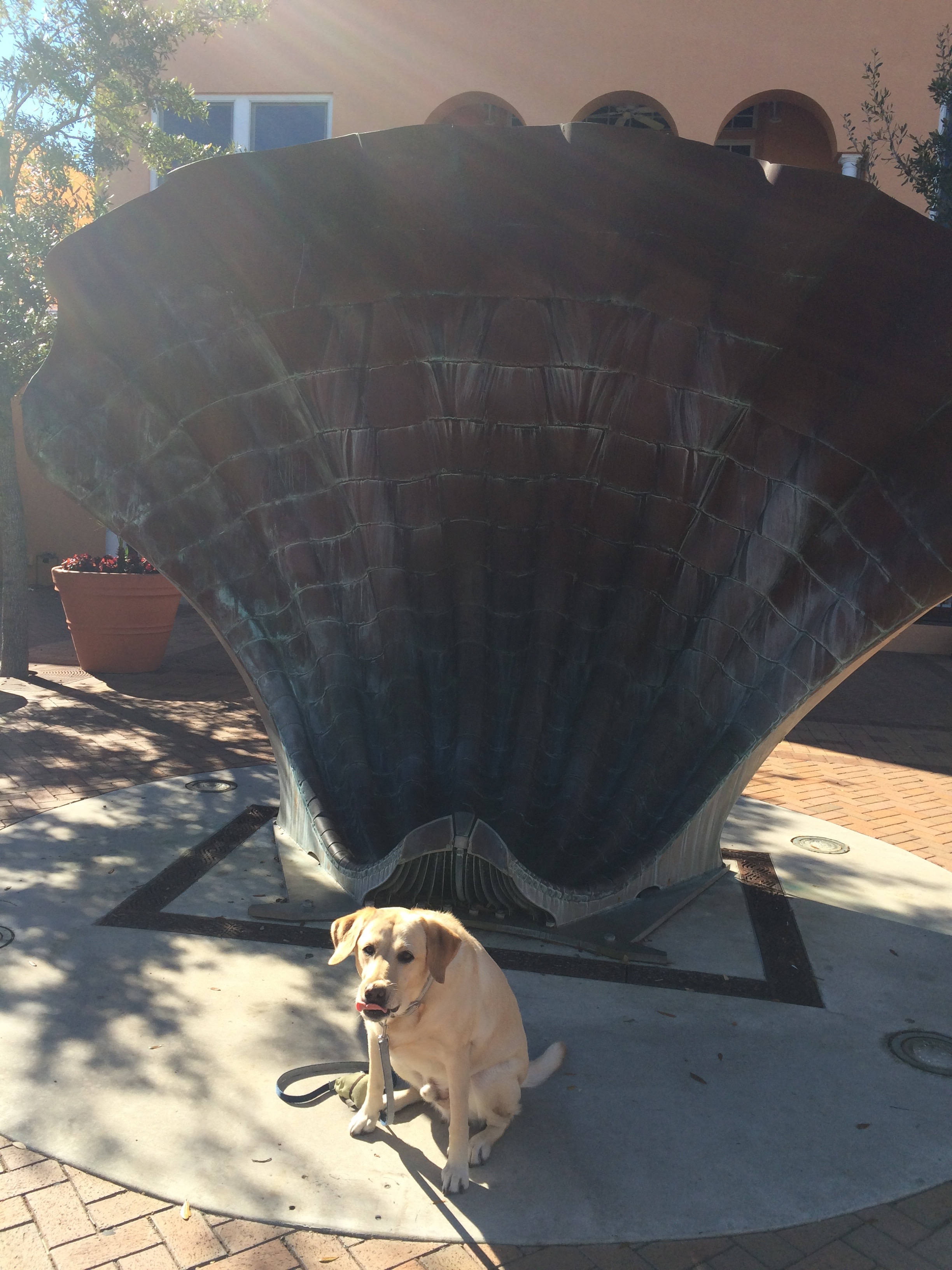 Giant Shells & Henley Hound
