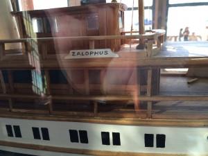 Zalophus, The Ringling