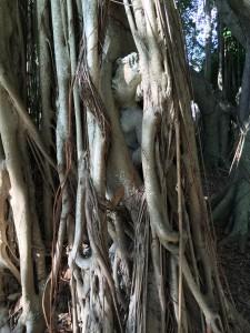 The Ringling Gardens, Sarasota FL
