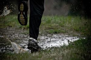 The Wild Run