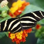 Blooming Butterflies (1)