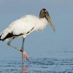 Storks and Corks