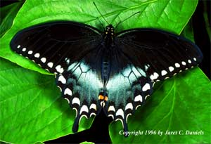 blythewood-butterfly-festival
