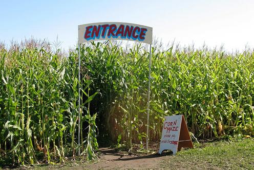 Ann Arbor Corn Maze
