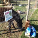Maddie feeding the donkey