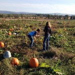 Picking pumpkins in the 9 acre patch