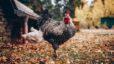 3 House Hunting Tips for Homesteading in Retirement