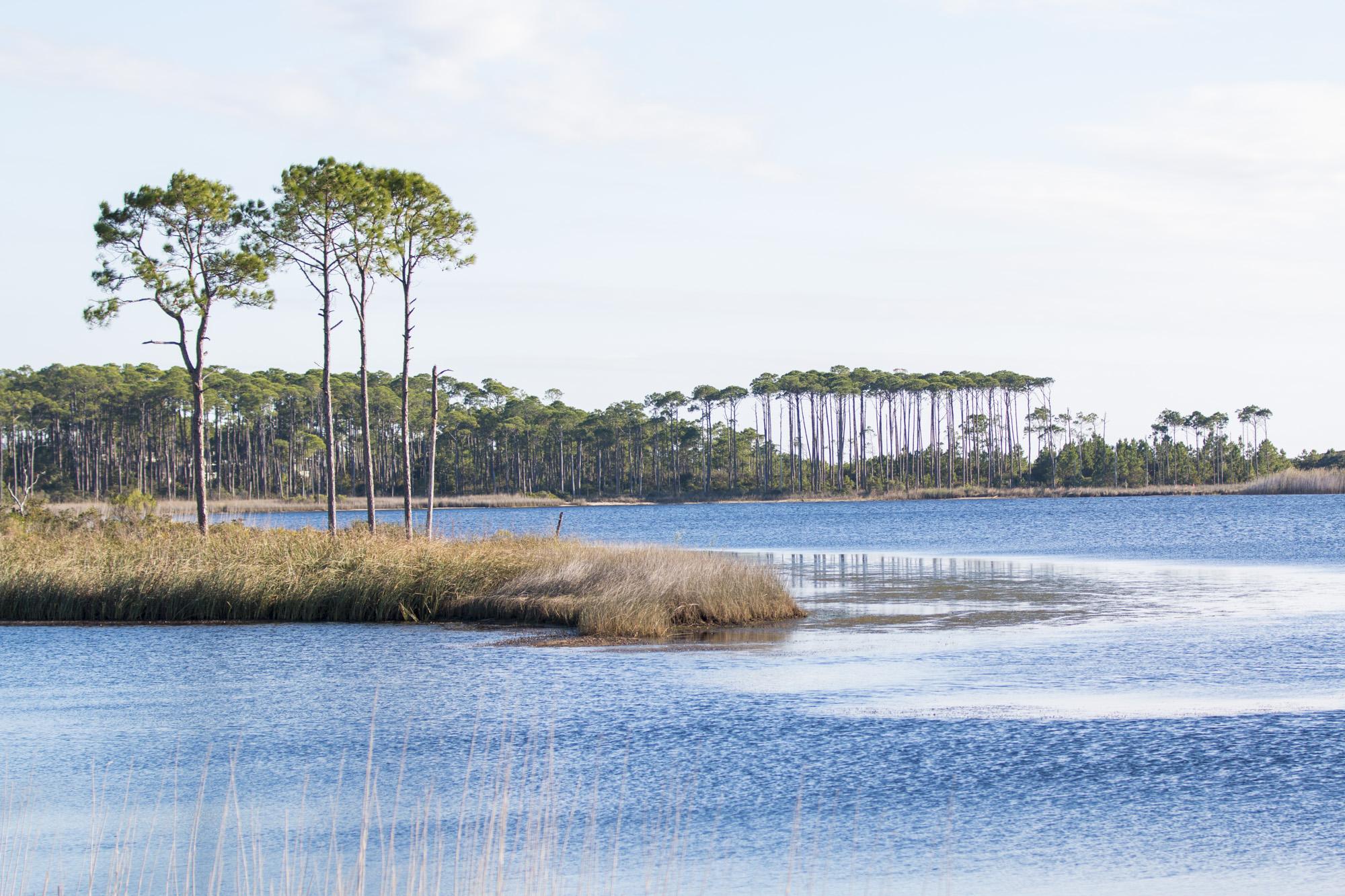 Gulf Coastal Plains - Four Regions of Texas Pictures of the gulf coastal plains