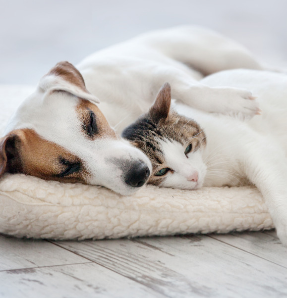 Guide to Selling a Home in Ann Arbor with a Pet
