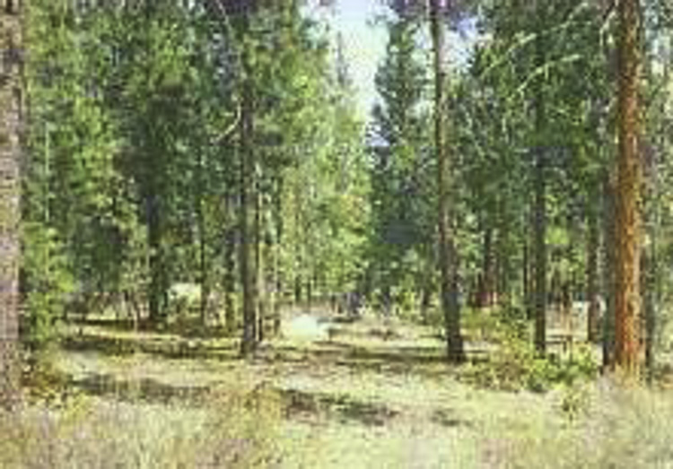 Level Acre Home Site Near Cascade Lakes & US Forest!