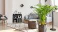 Decorative,Areca,Palm,In,Interior,Of,Room