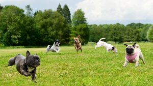 Dog Parks in Tuscaloosa