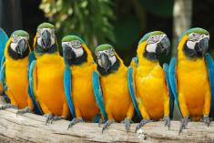 copyright free zoo photo