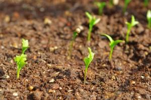 plants-1206382_960_720