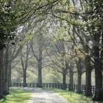 Milton driveway
