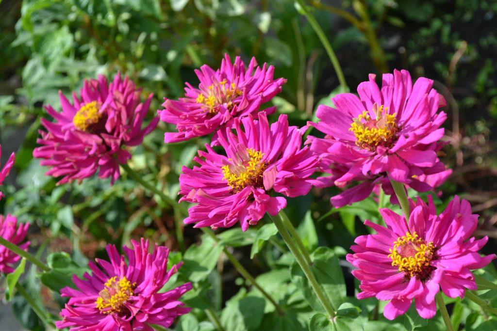 flower-110692_1920