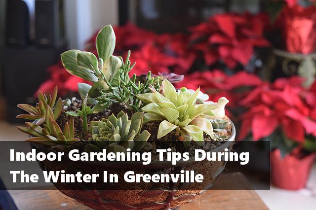 Indoor Gardening Tips During The Winter In Greenville