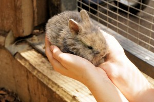 Hands holding a bunny.