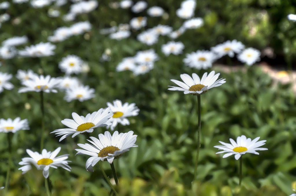 wildflowers in San Diego