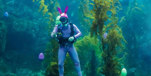 Birch Aquarium Eggstravaganza