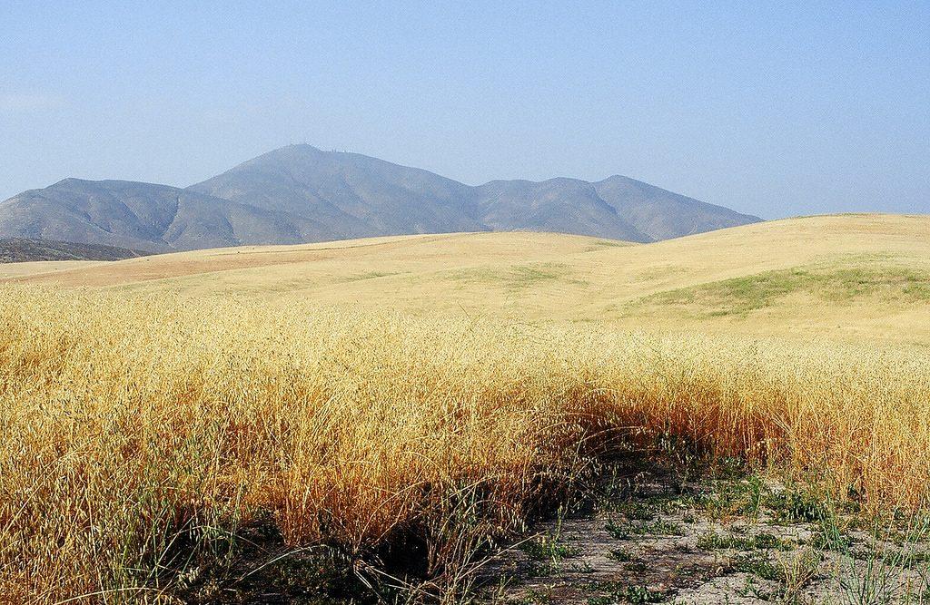 Otay Ranch open field