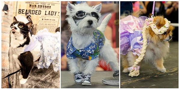 San Diego October Events - Pet Con costume contest