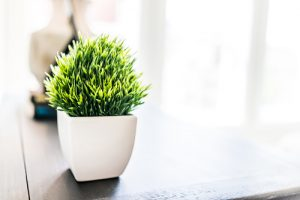 bonus room with plant