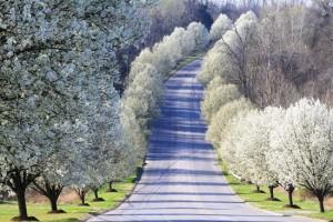 trees.102951