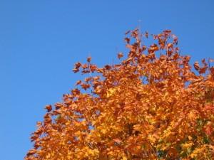autumn-acer-1399380